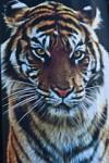 MoO_Tiger_Head